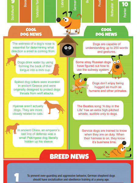 The most popular dog breeds Infographic