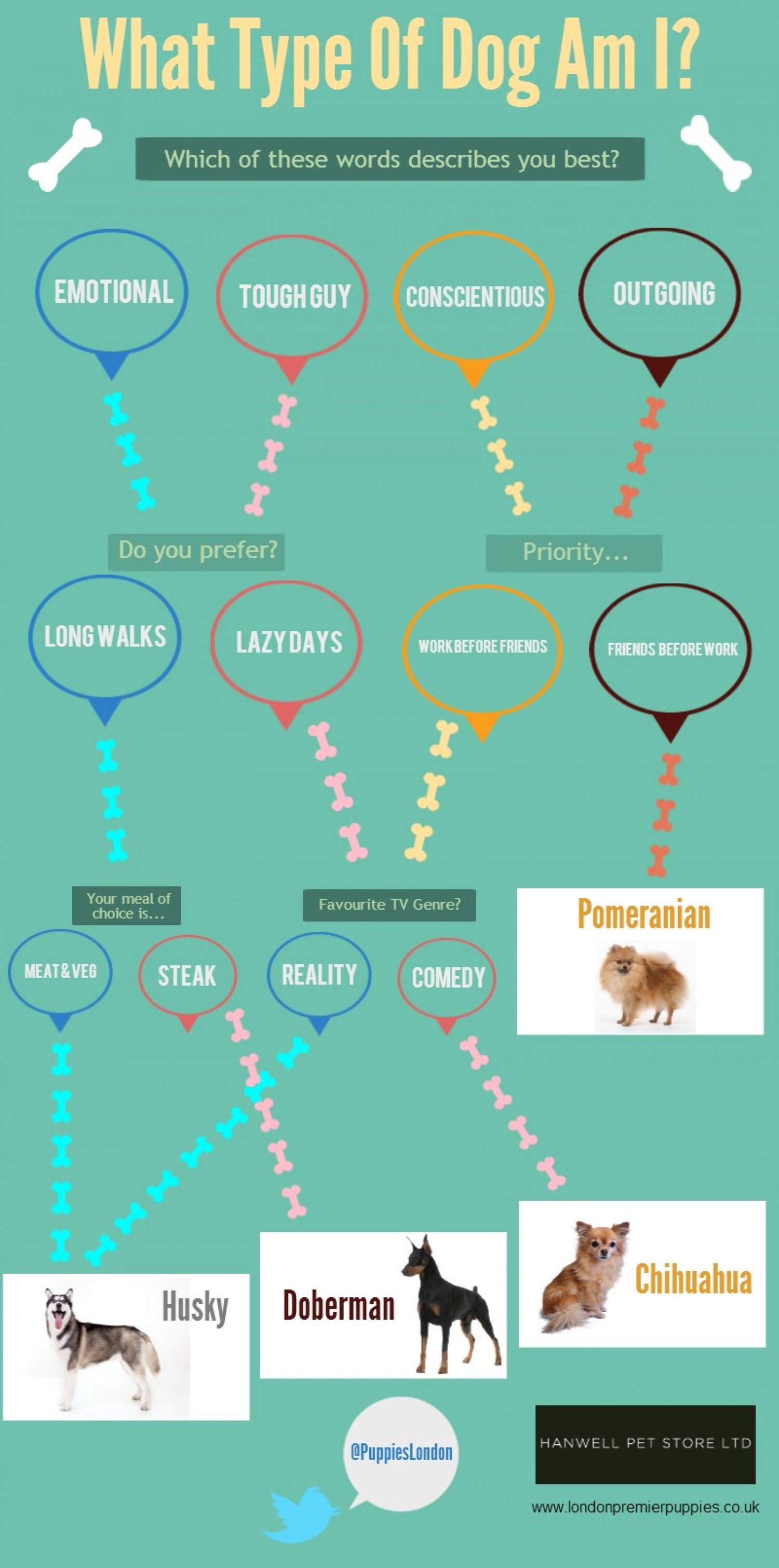 What Type Of Dog Are You? Infographic