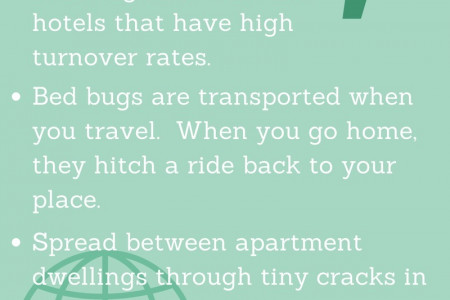 When Bed Bugs Attack! I Bed Bug Infographic Infographic