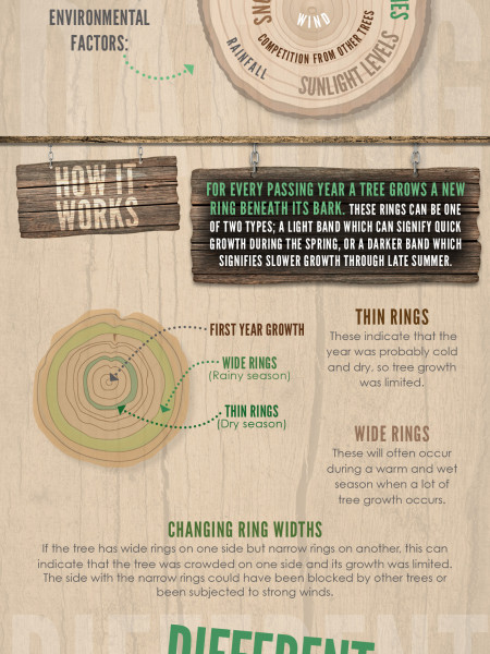 Wood's The Difference Infographic