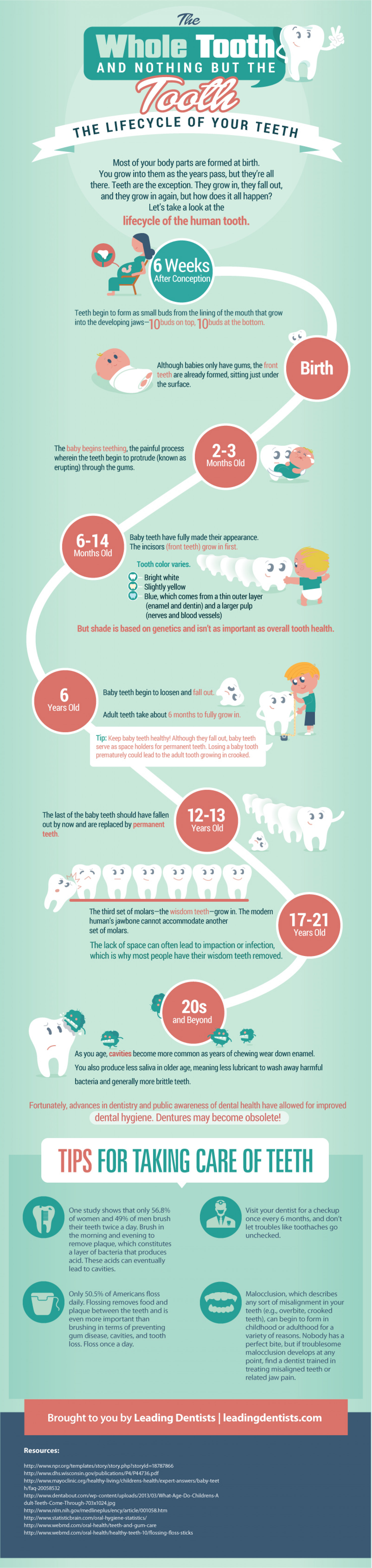 The Whole Tooth and Nothing But the Tooth: The Lifecycle of Your Teeth Infographic