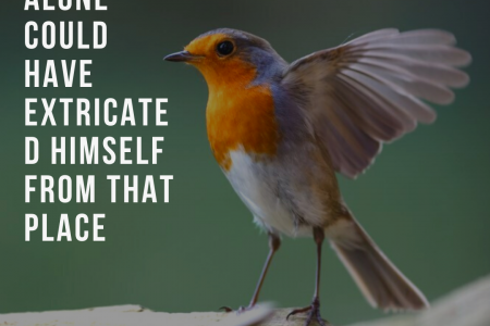 A bird alone could have extricated himself from that place Infographic