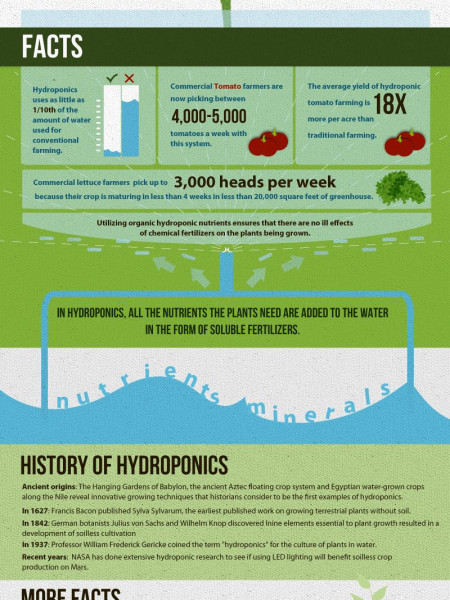 A Guide to Hydroponic Gardening Infographic