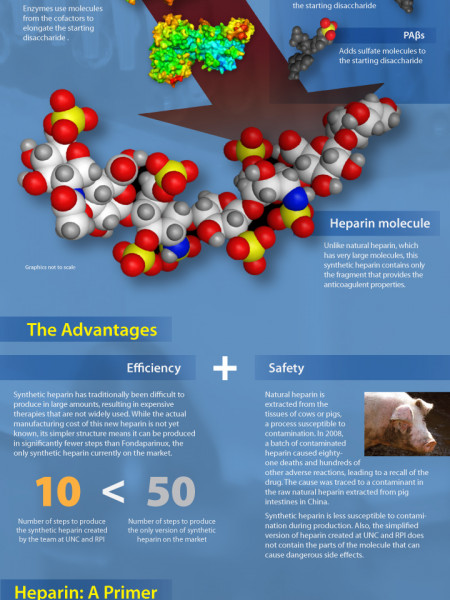 A Simpler, Safer Synthetic Heparin Infographic