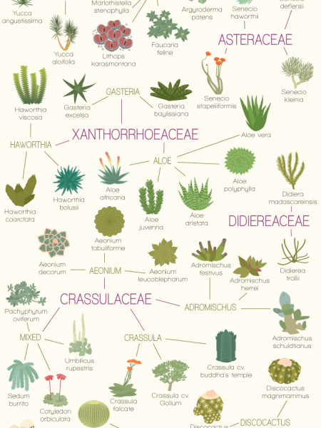 A Visual Compendium of Succulents Infographic