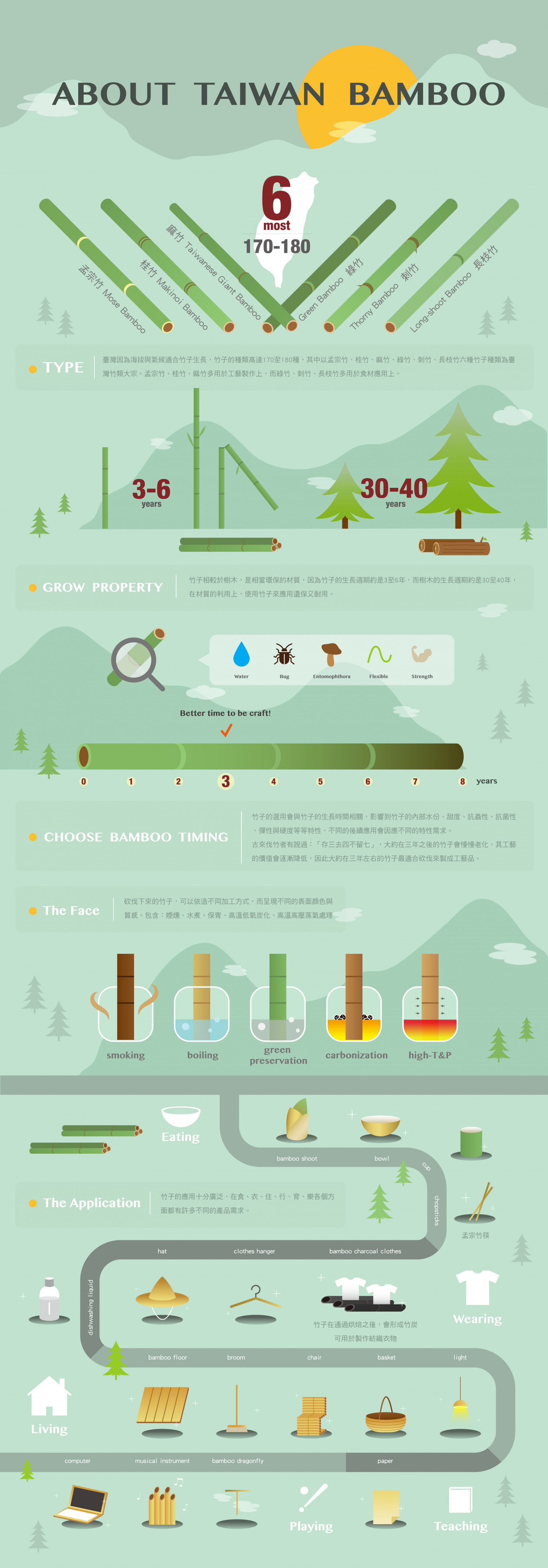 About Taiwan Bamboo Infographic
