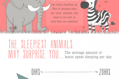 Amazing Animals & Their Sleeping Habits Infographic