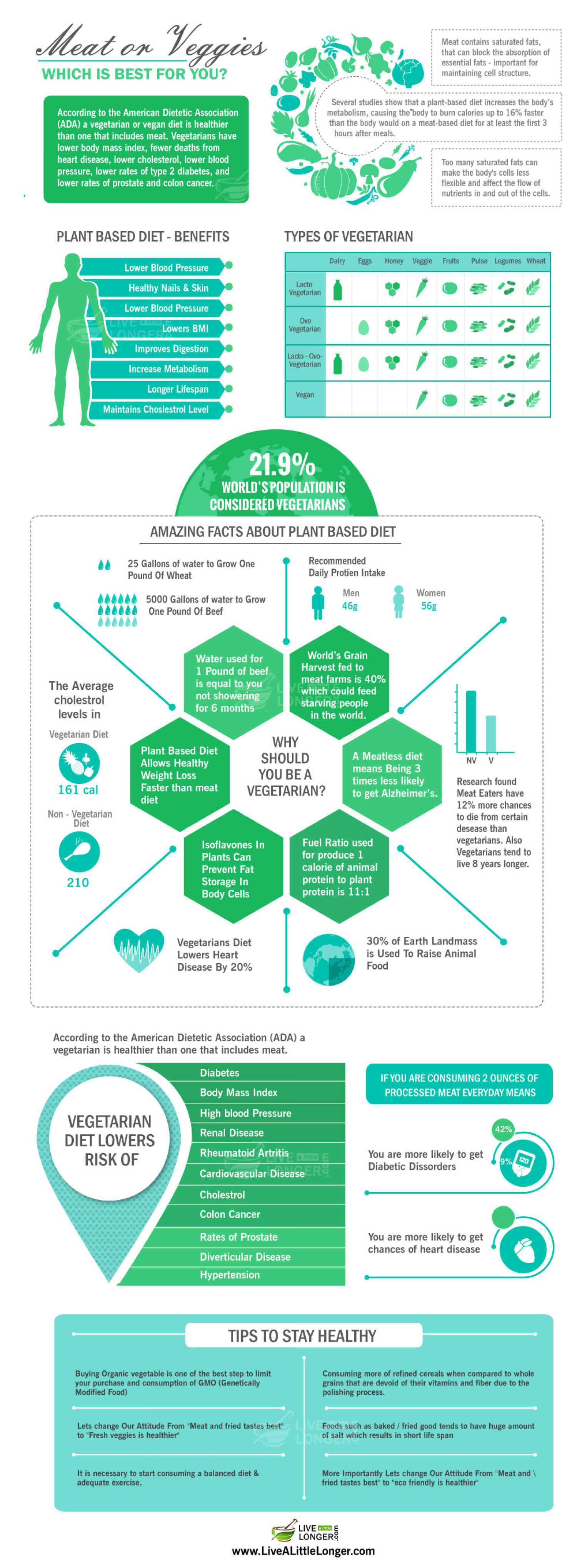 Amazing Facts About Plant Based Diet Infographic