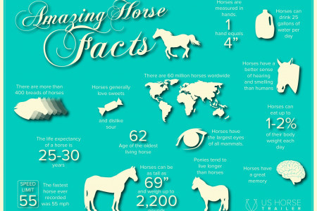 Amazing Horse Facts Infographic Infographic