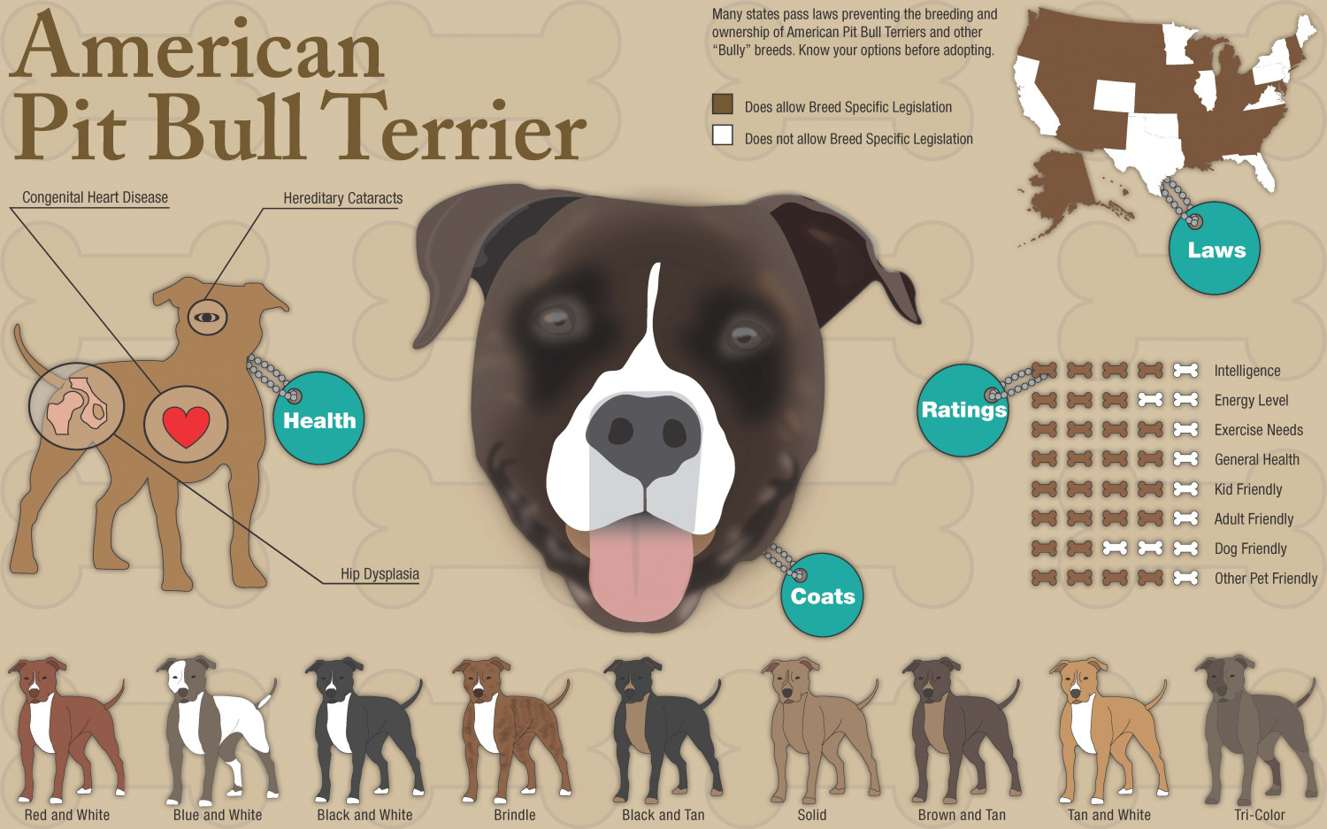 an argument against the reputation of aggressive behavior of the american staffordshire terriers pit 5 reasons why pit bulls are misunderstood  myth 3: pit bulls are naturally violent, aggressive and mean, and are very dangerous dogs  american pit bull terriers, the most popular breed used .