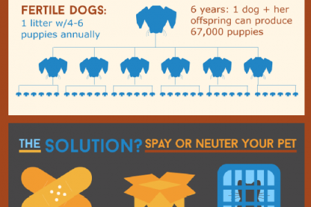 An Animal Lover's Guide to Spaying and Neutering Infographic