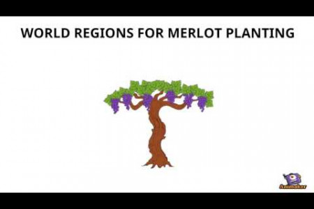 An Introduction to Merlot Infographic
