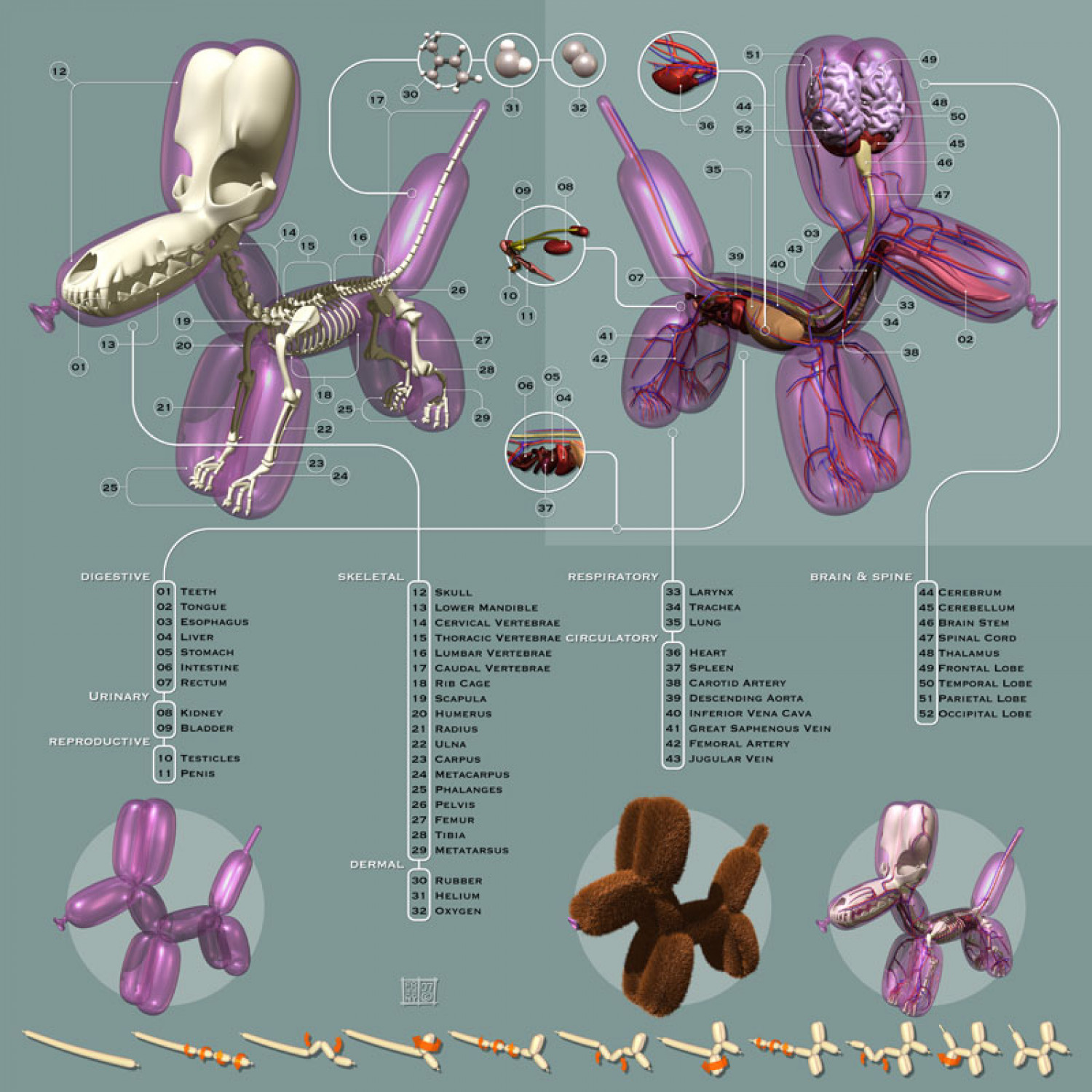 Anatomy of a Balloon Animal Infographic