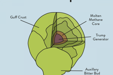 Anatomy of a Brussels Sprout Infographic