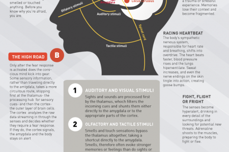 Anatomy of Anxiety Infographic Infographic