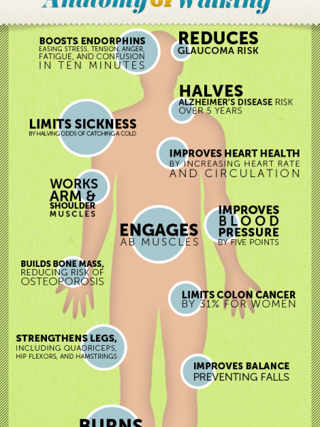 Anatomy of Walking Infographic