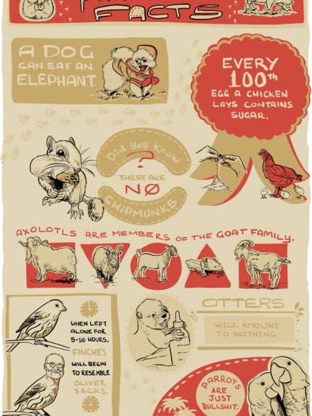 Animal Facts Infographic