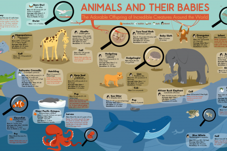Animals and Their Babies Infographic