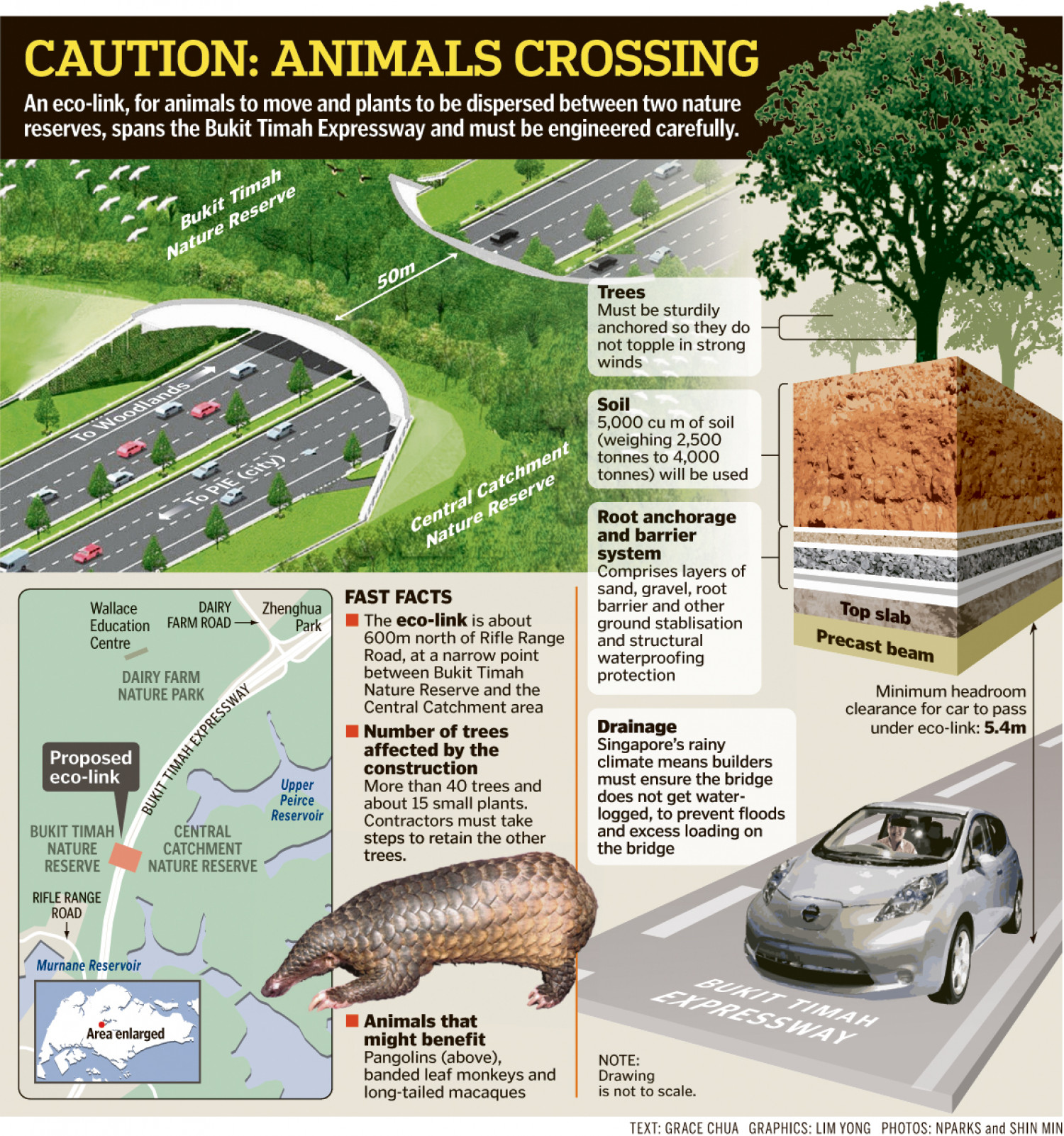 Animals Crossing Infographic