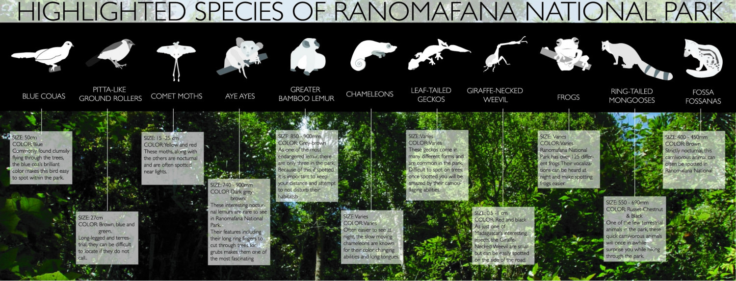 Animals in Ranomafana National Park Infographic