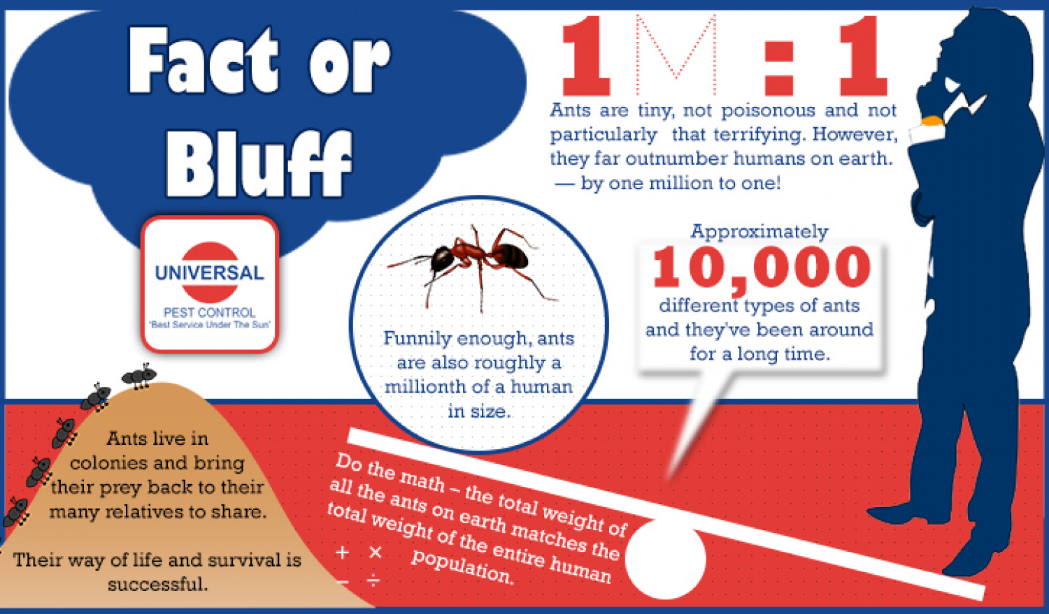 Ants: Fact or Bluff Infographic