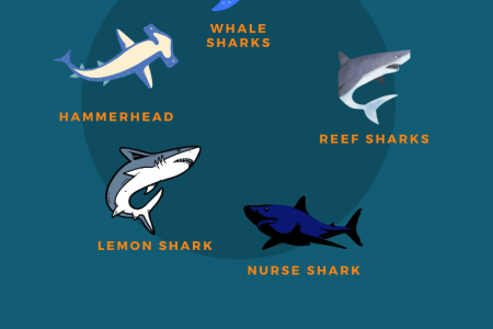 Are There Sharks In Aruba? Infographic