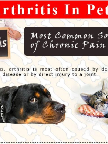 Arthritis in Dogs and Cats Infographic