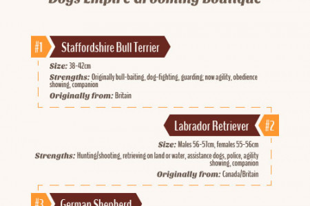 Australia's Top 5 Most Popular Dog Breeds Infographic
