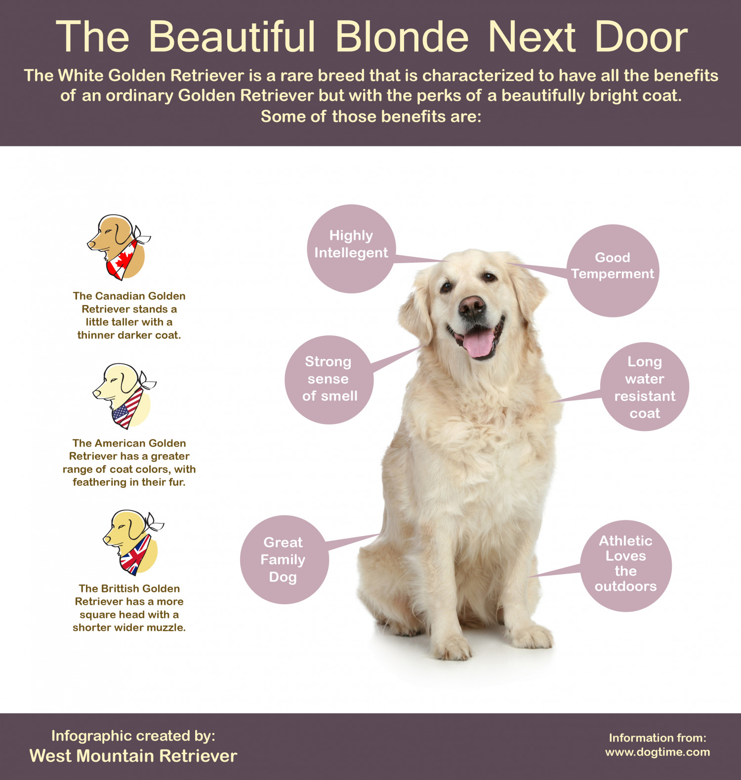 Beautiful Blonde Next Door Infographic