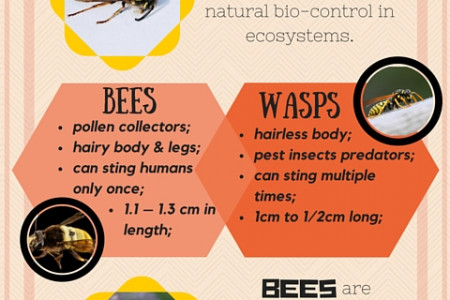 Bees vs. Wasps Infographic