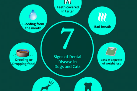 Benefits of pet oral hygiene products Infographic