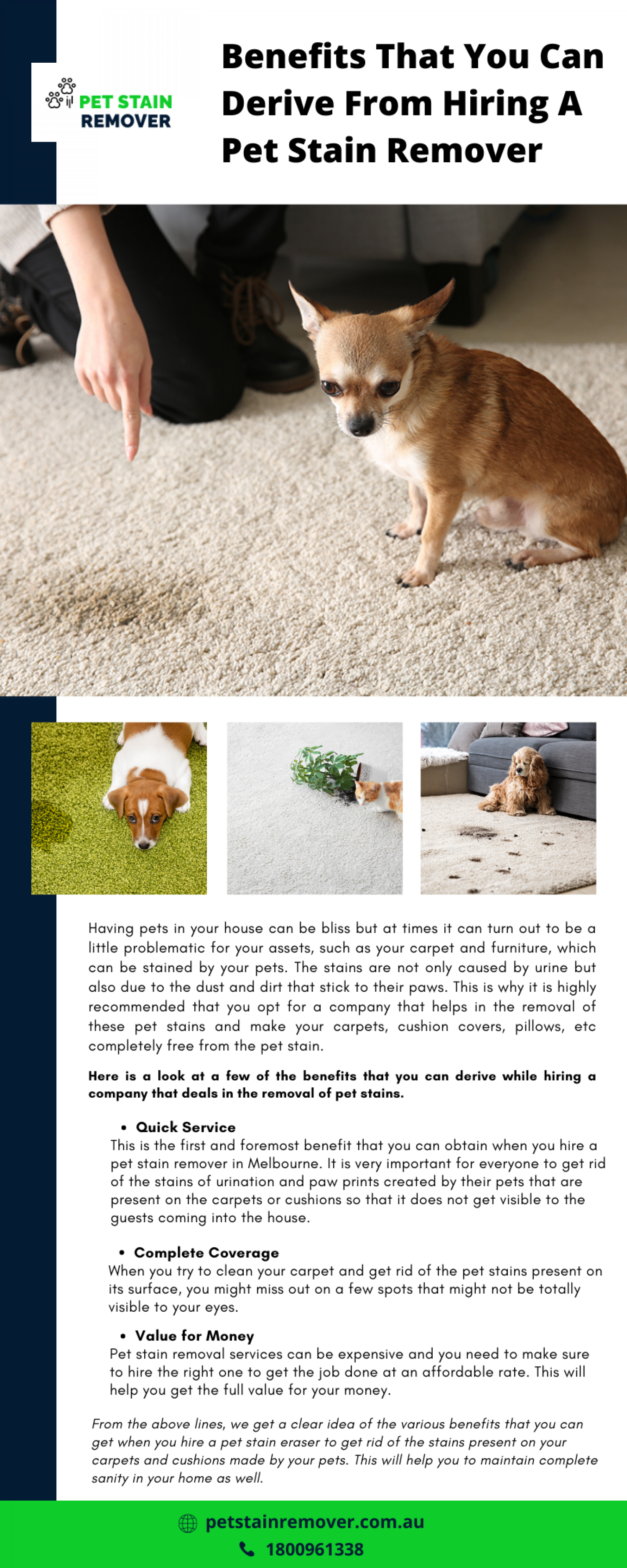 Benefits That You Can Derive From Hiring A Pet Stain Remover Infographic