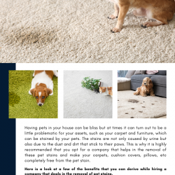 Benefits That You Can Derive From Hiring A Pet Stain Remover