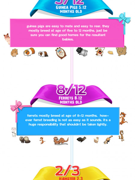 Best Age For Breeding your Pet Infographic