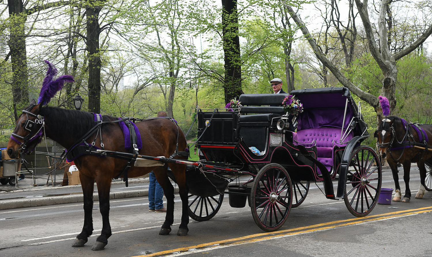 Best Central Park Horse and Carriage Tours in NYC Infographic