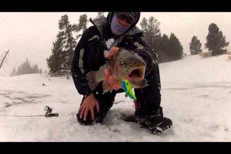 Best Ice Fishing Lure Infographic