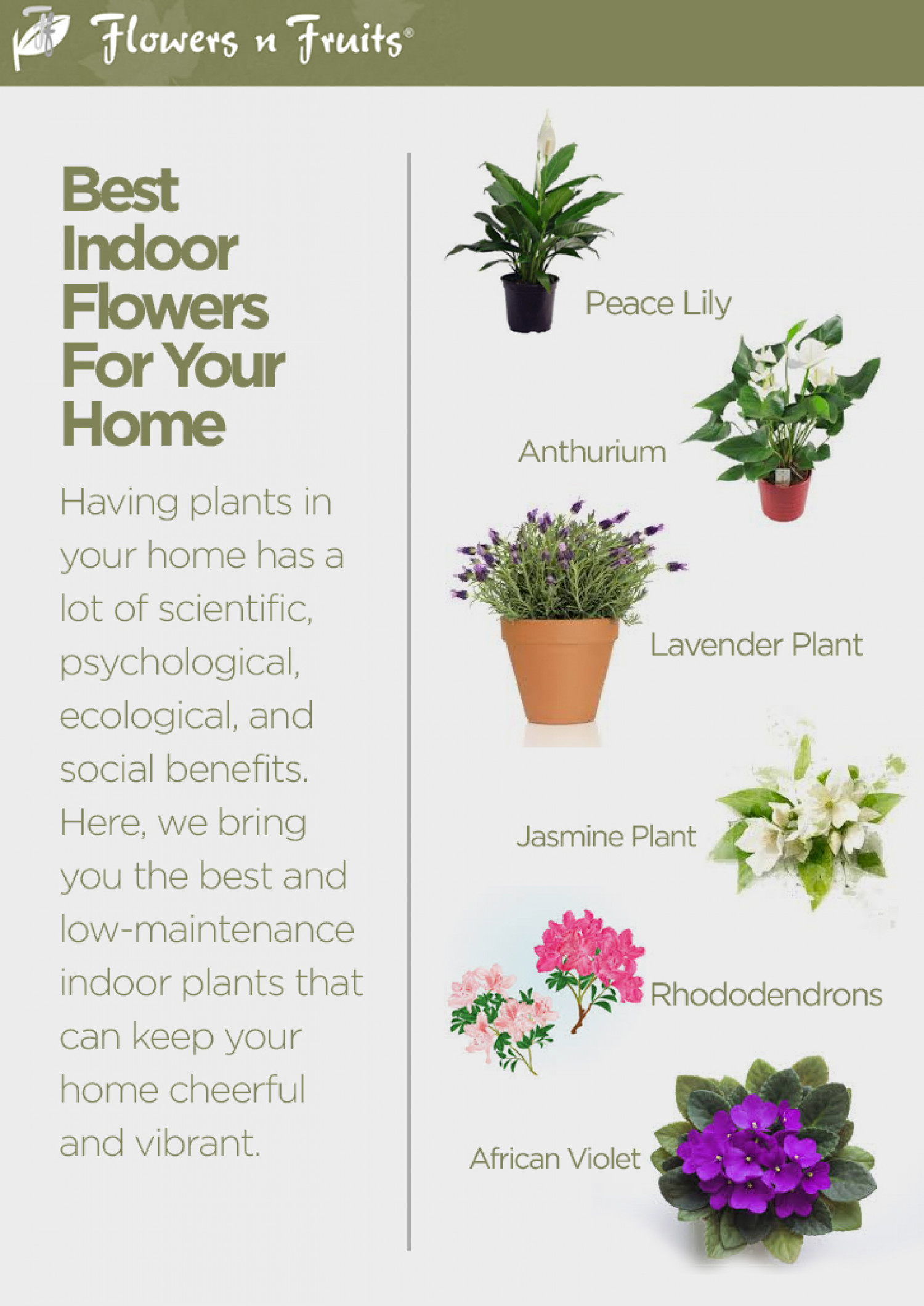 Best Indoor Flowers For Your Home Infographic