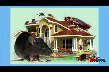 Best Practices for a Pest Free Home Infographic