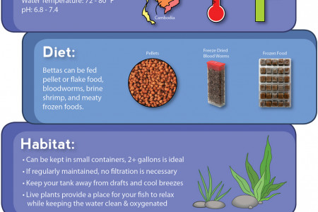 Betta Fish Care Infographic Infographic