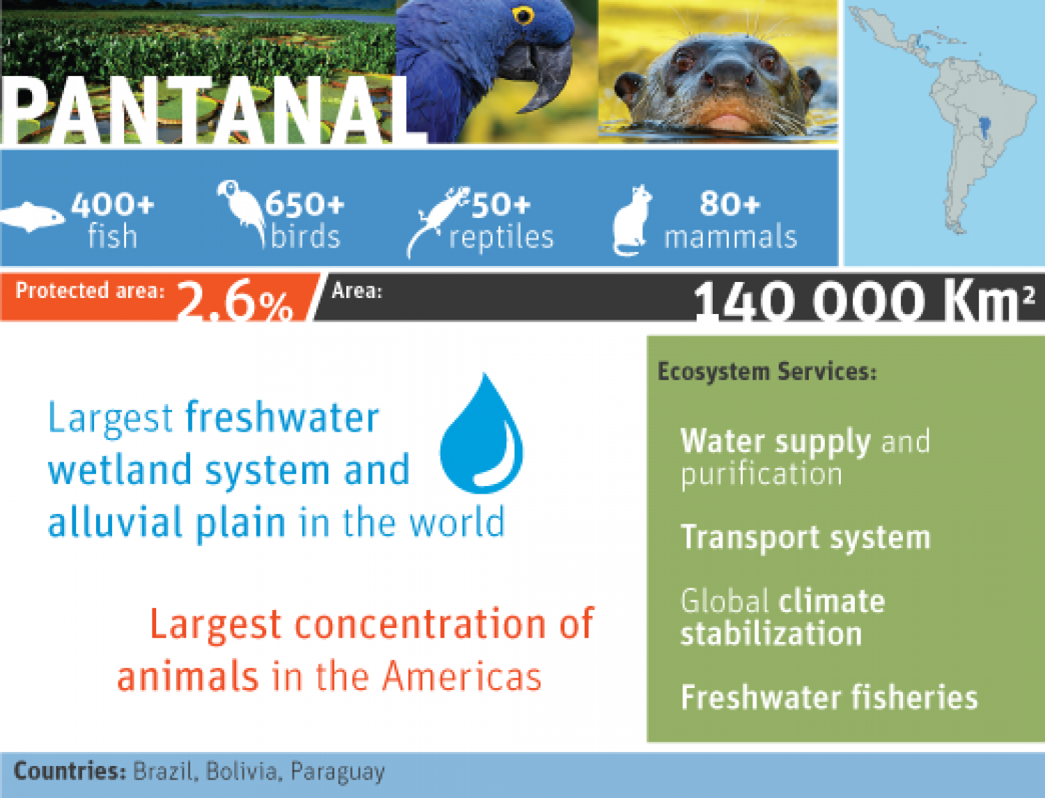 biodiversity in pantanal Infographic
