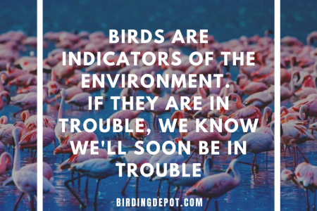 Birds are indicators of the environment Infographic