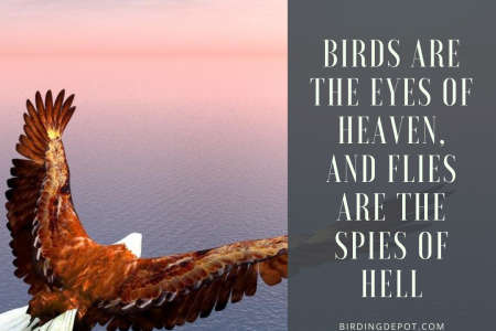 Birds are the eyes of heaven Infographic