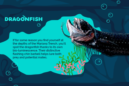 Bizarre Creatures in The Marianas Trench Infographic