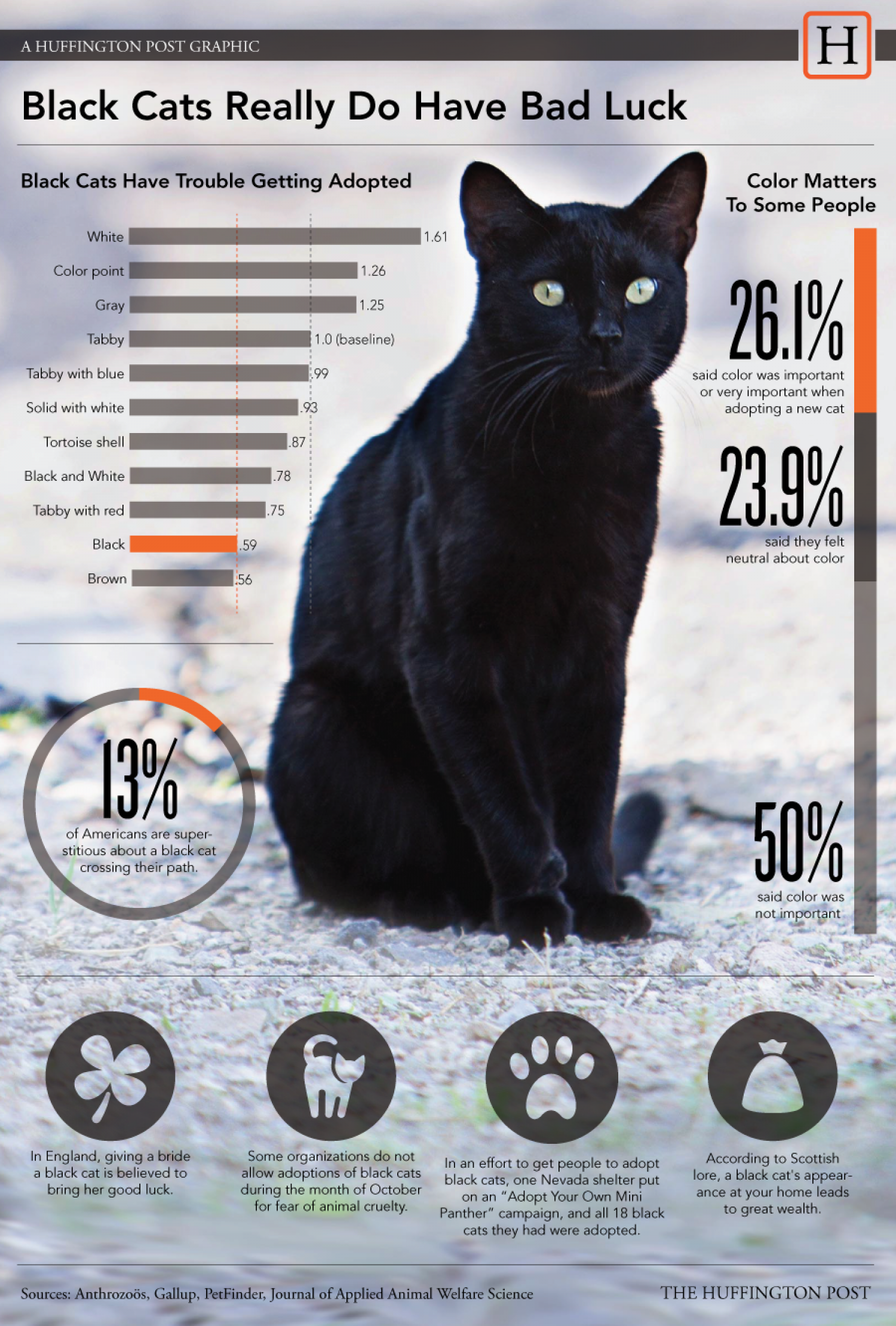 Black  Cats Really Do Have Bad Luck Infographic