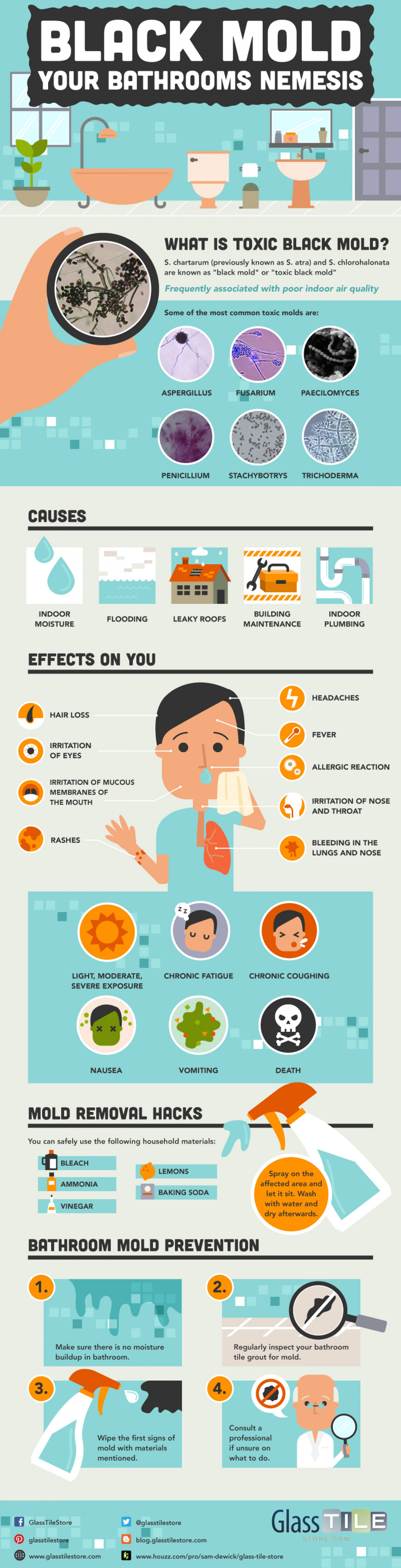Black Mold: Your Bathrooms Nemesis  Infographic