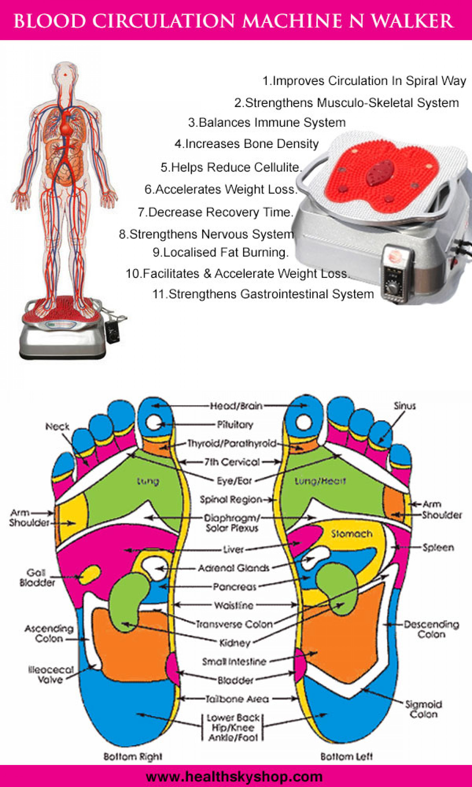 Blood Circulation Machine Infographic
