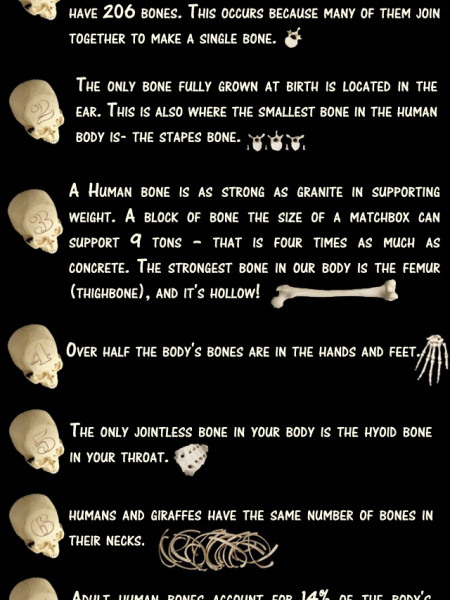 Bone Facts  Infographic