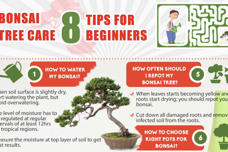 Bonsai tree Care - 8 tips for beginners Infographic