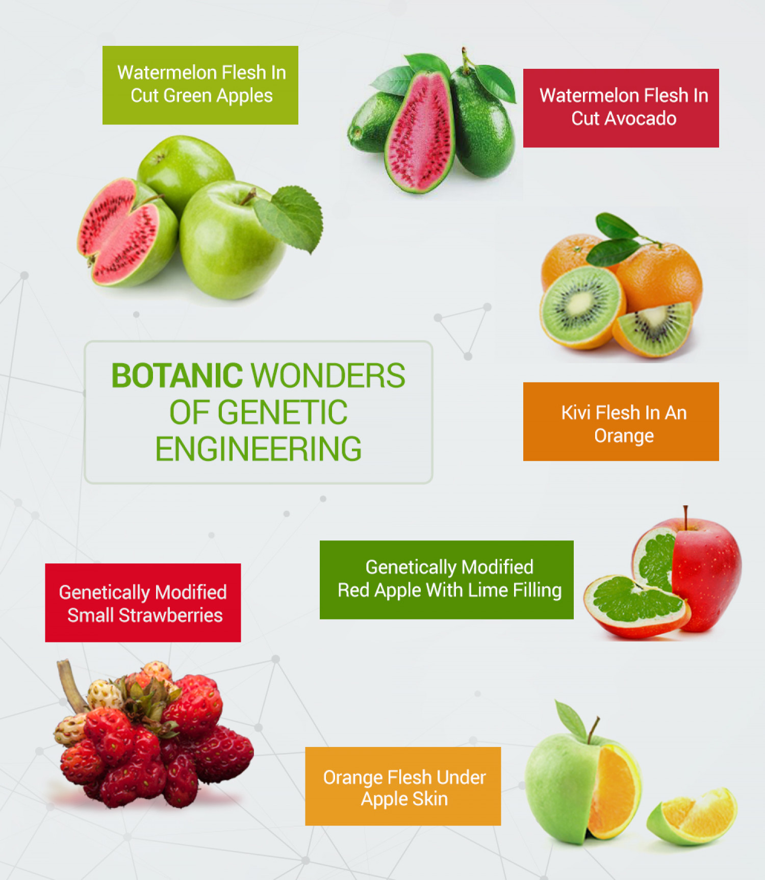 Botanic Wonders of Genetic Engineering Infographic