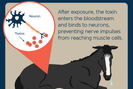 Botulism in Horses  Infographic